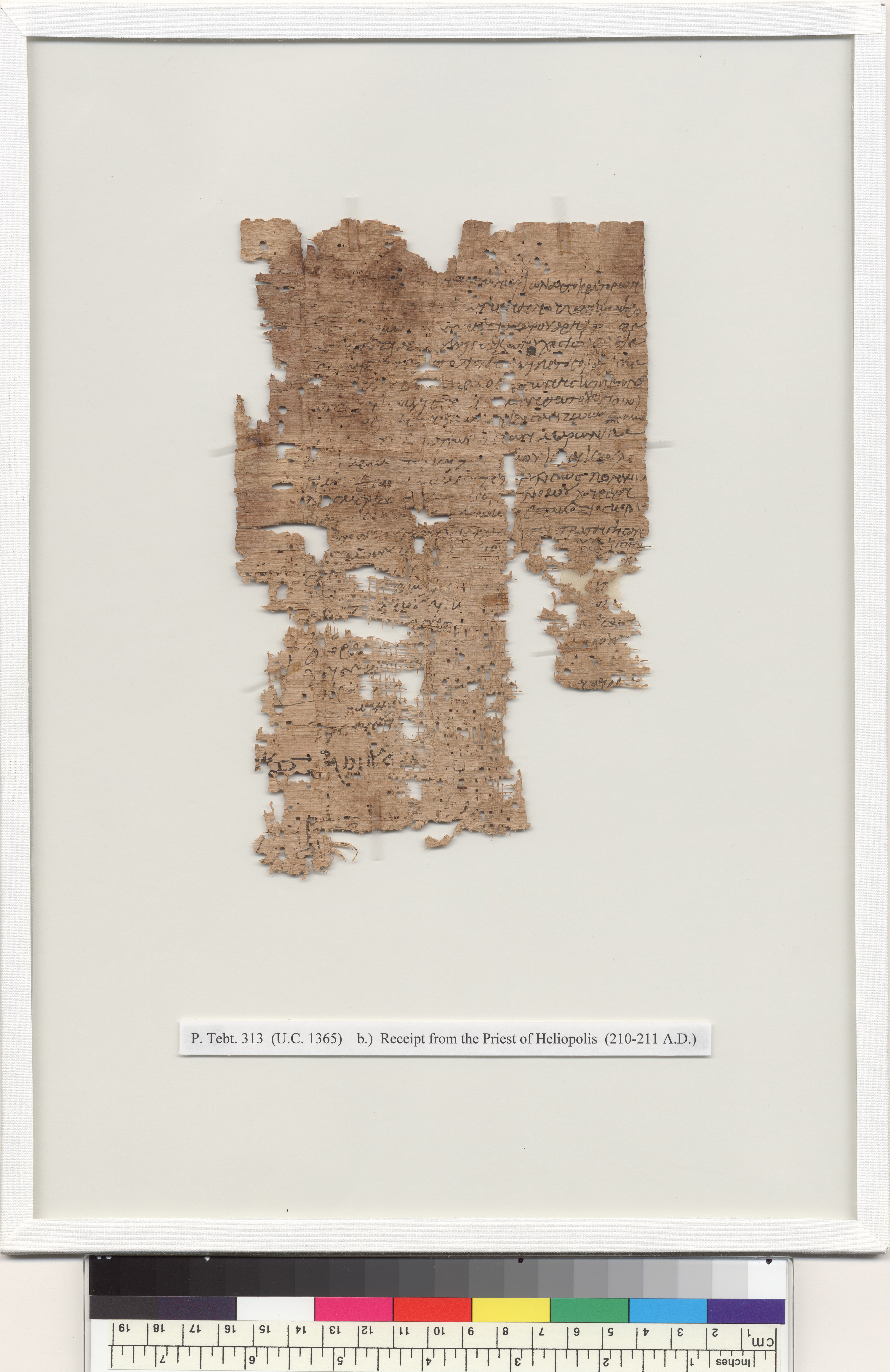 P.Tebt. 313